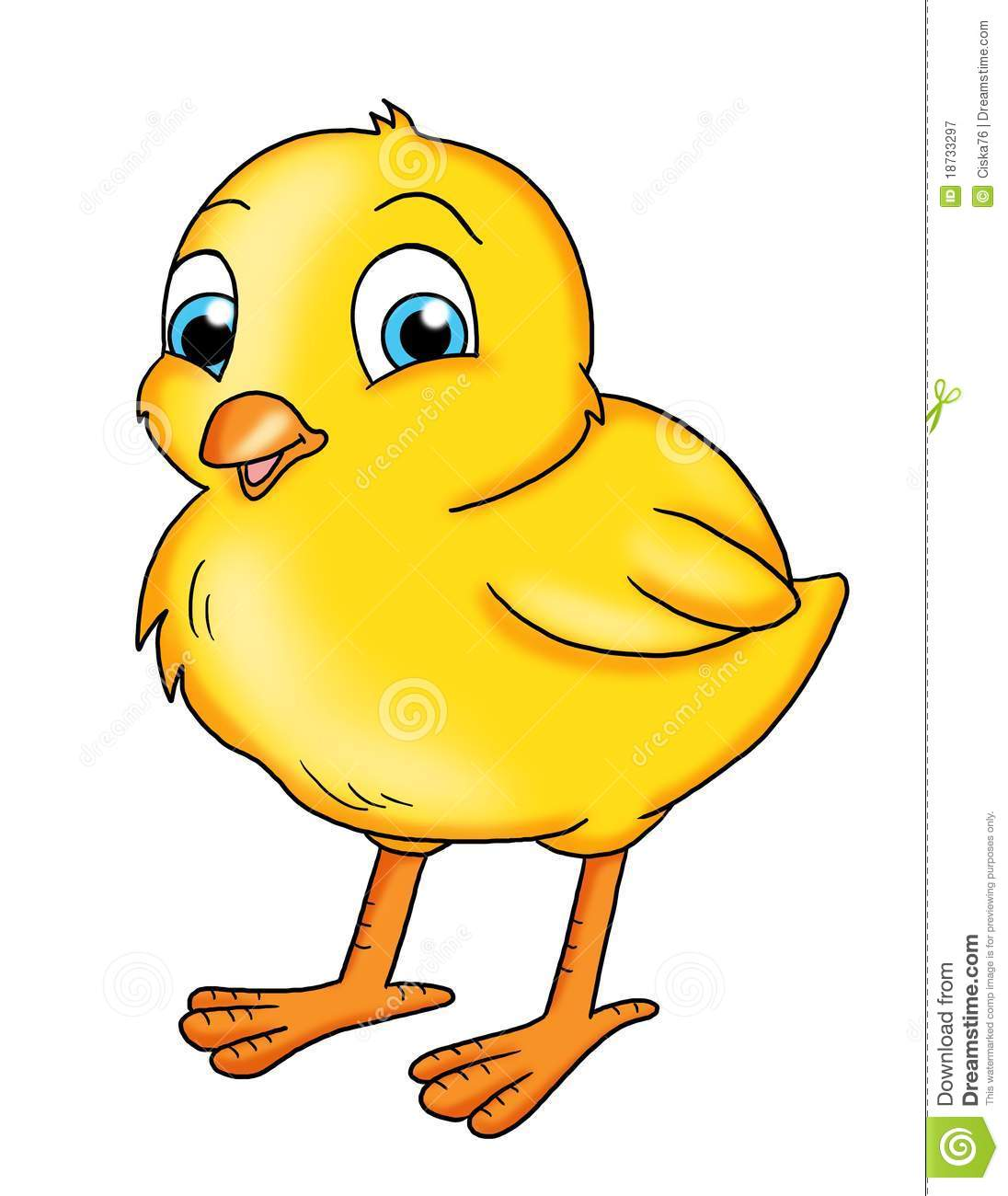 Baby Chick Royalty Free Stock Photograph-Baby Chick Royalty Free Stock Photography Image 18733297-4