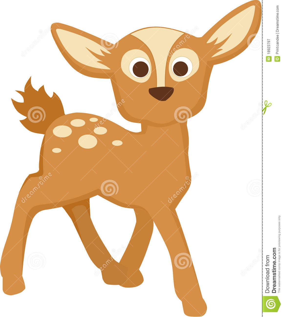 Baby Deer Royalty Free Stock Photography Image 18923797