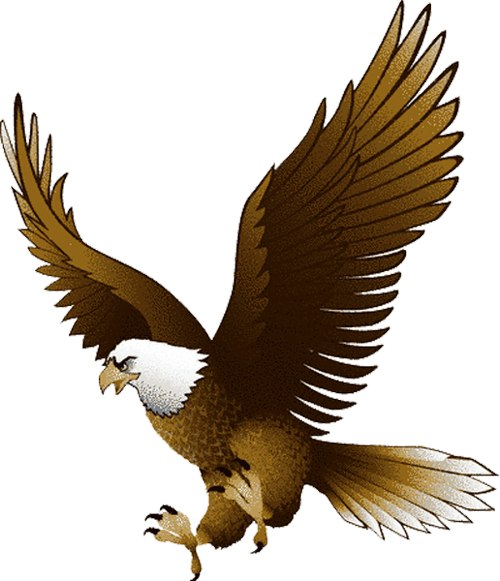 Baby Eagle Clip Art Lucerne Early Connection