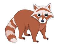 baby raccoon. Size: 46 Kb - Raccoon Clip Art