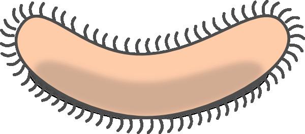 Bacteria Clipart-Bacteria Clipart-8