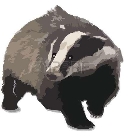 badger: Badger Illustration