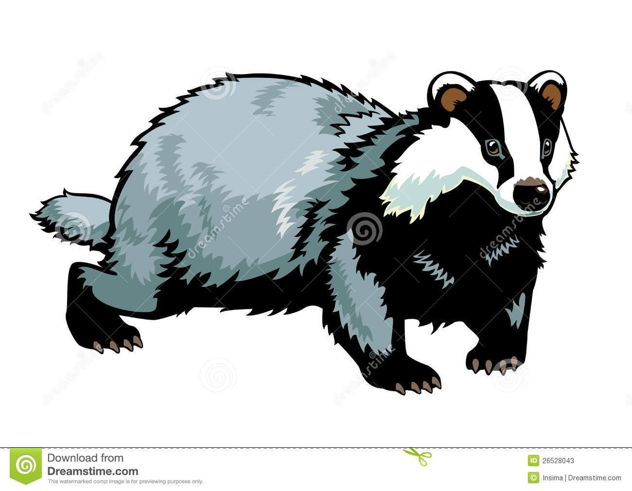 Badger On White Stock Photos-Badger on white Stock Photos-11