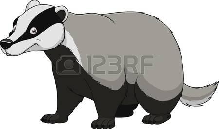 badger: Vector illustration adult funny badger smiling on a white background Illustration