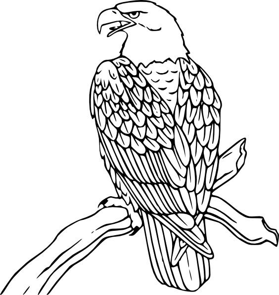 Bald Eagle Clip Art-Bald Eagle clip art-3