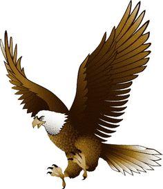 Bald eagle clip art set bald eagle clip art and eagles