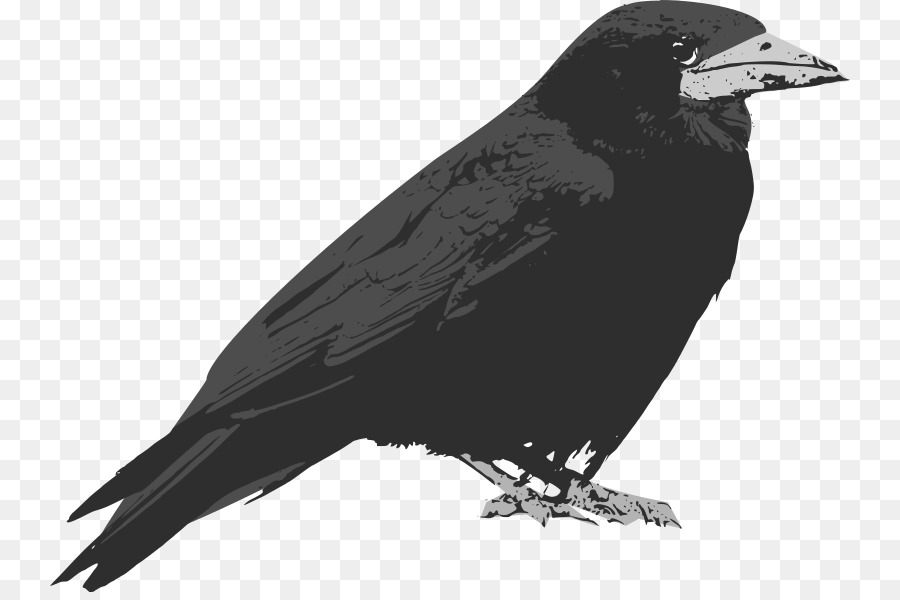 Common Raven Baltimore Ravens Clip Art --Common raven Baltimore Ravens Clip art - raven-15