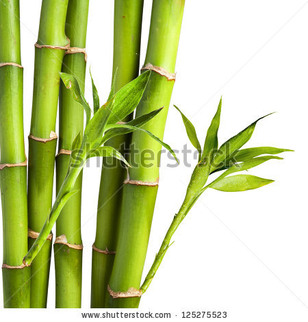 ... Bamboo Clip Art ...