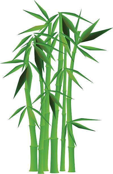 Bamboo vector art illustration-Bamboo vector art illustration-10