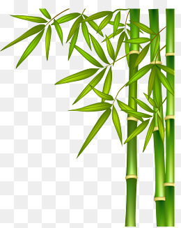 green bamboo, Green Bamboo, Bamboo, Bamboo Leaf PNG and Vector