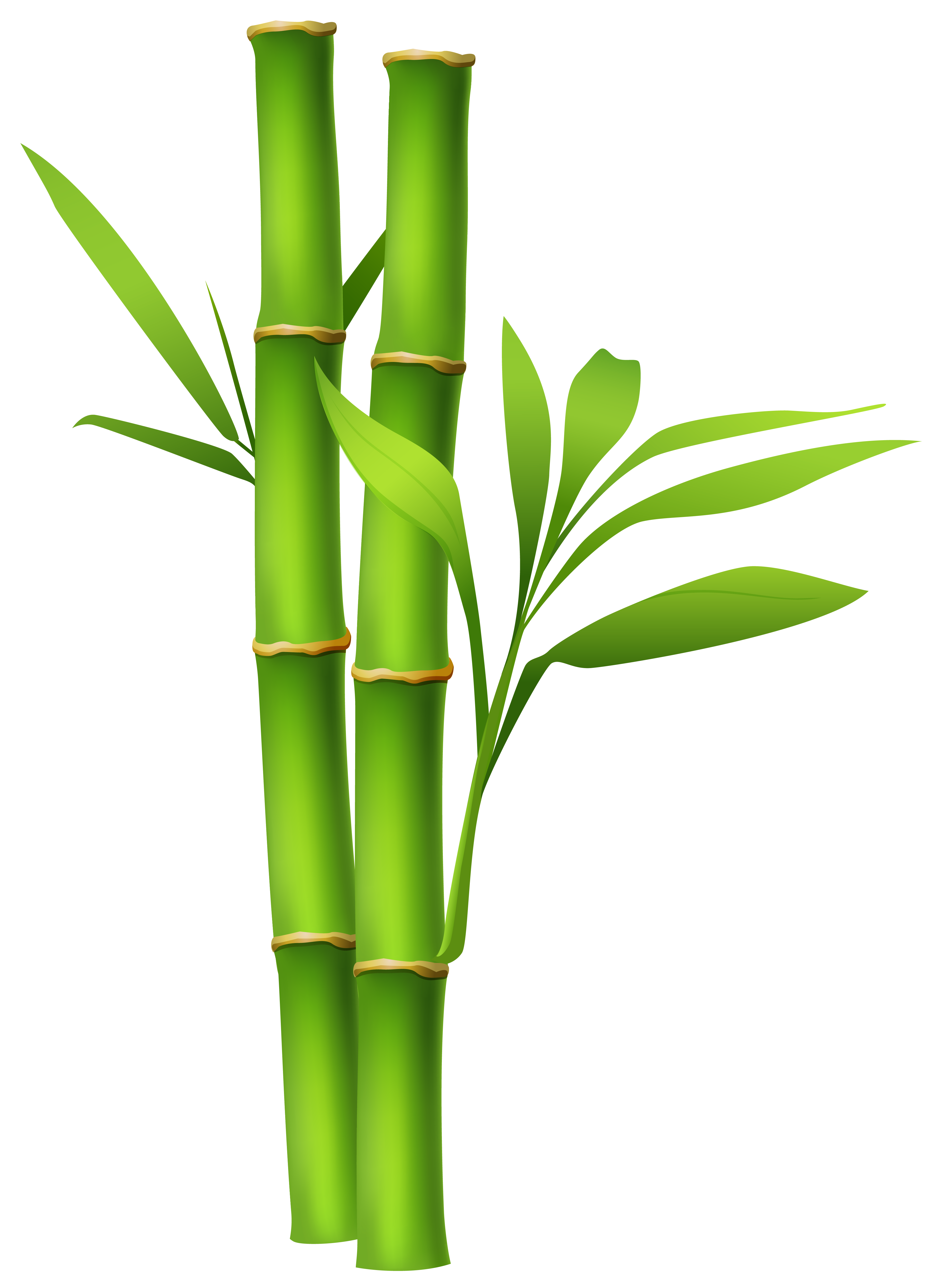 ... Bamboo Clipart - clipartall ...-... Bamboo Clipart - clipartall ...-7