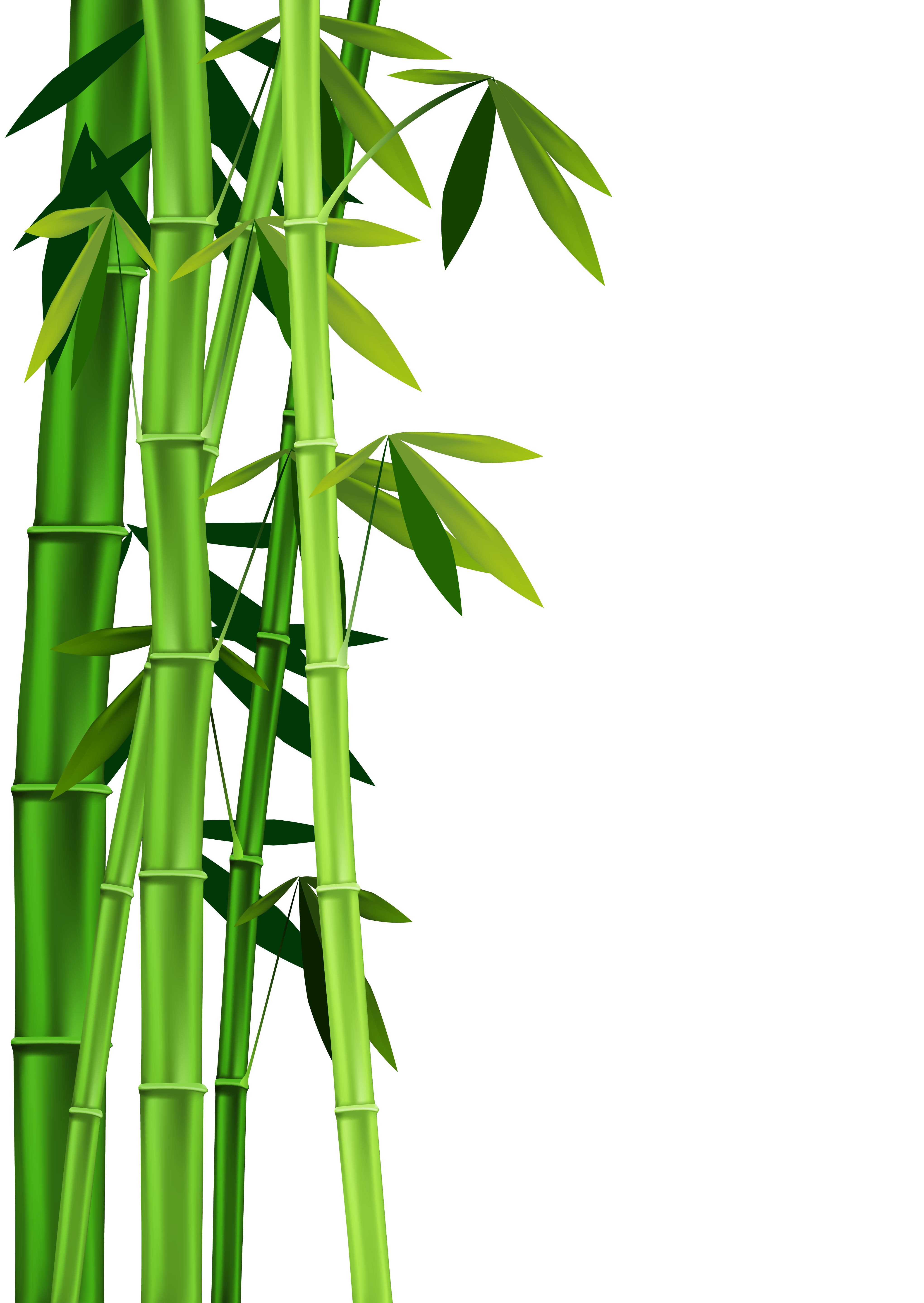 ... Bamboo Clipart - clipartall ...-... Bamboo Clipart - clipartall ...-17