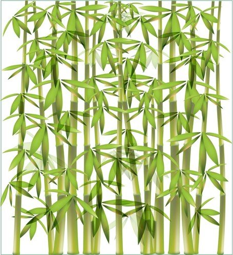 Vector Bamboo Branches Illustration; Bamboo Background 1