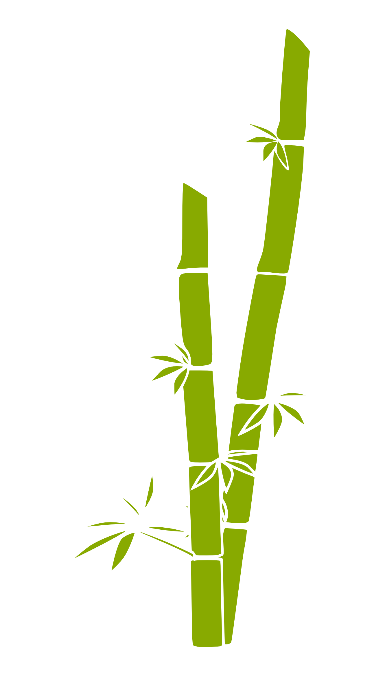 Bamboo Grass Tree 114 555px.png ...