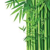 bamboo shoot; bamboo leaves ...