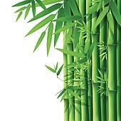 bamboo shoot; bamboo leaves ...