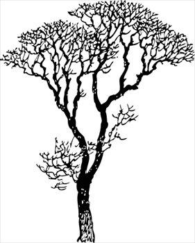 Bare-tree-bare-tree-2