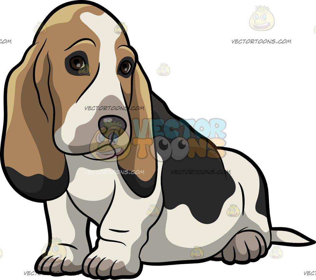 A Cute Basset Hound Pet Dog