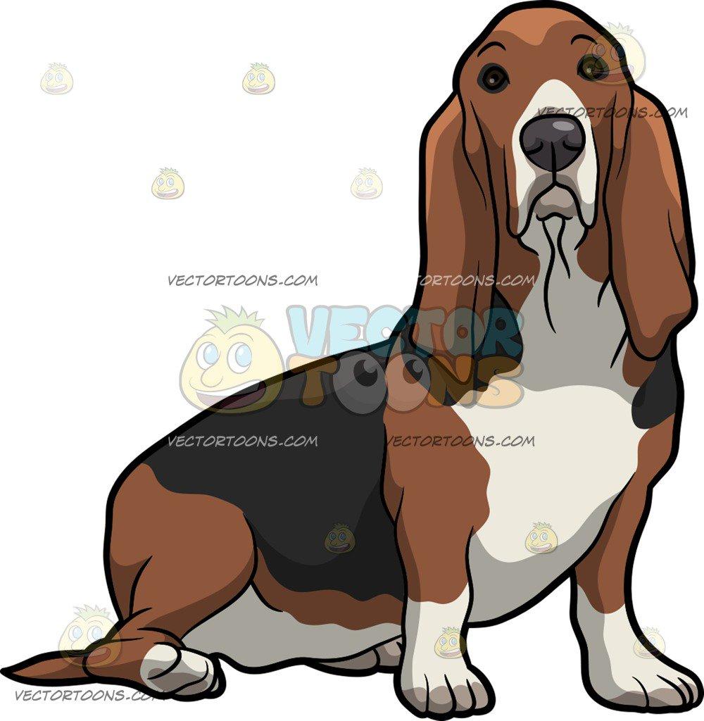 An Alerted Basset Hound Pet Dog