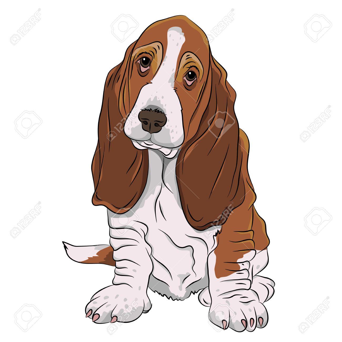 basset hound puppy realistic Stock Vector - 57238247