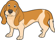 basset hound dog. Size: 108 Kb