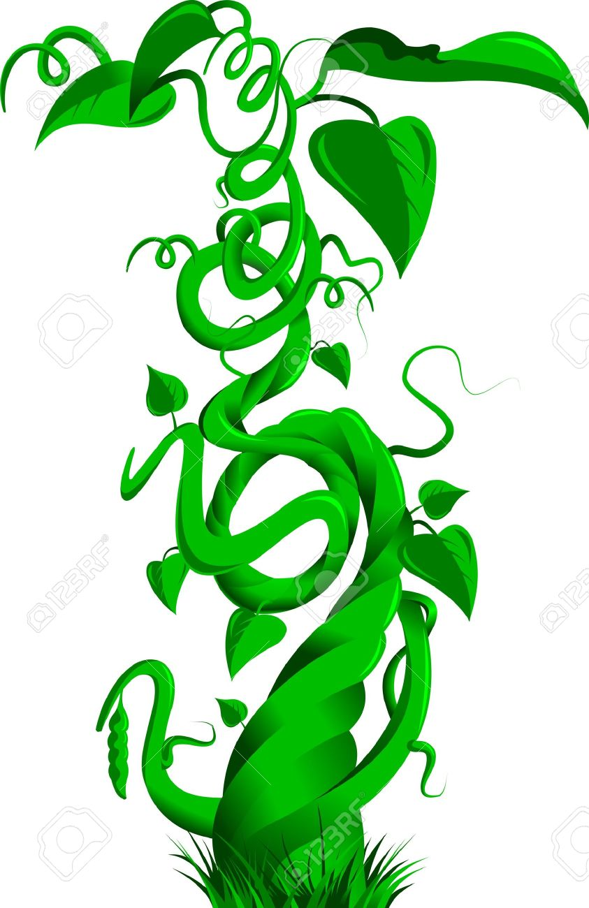 beanstalk: Vector illustration of a bean stalk on the fairy tale Jack and the Beanstalk
