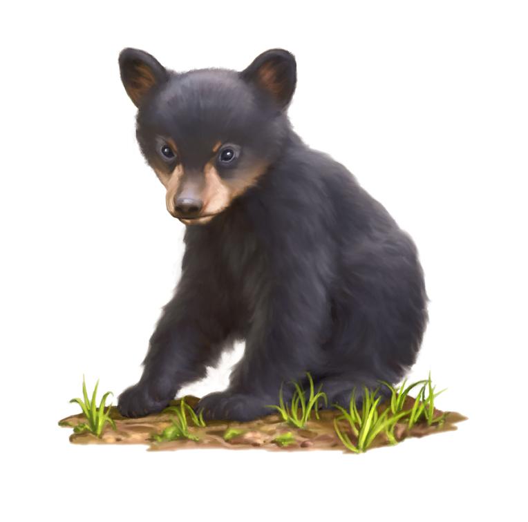 Bear Cub Image