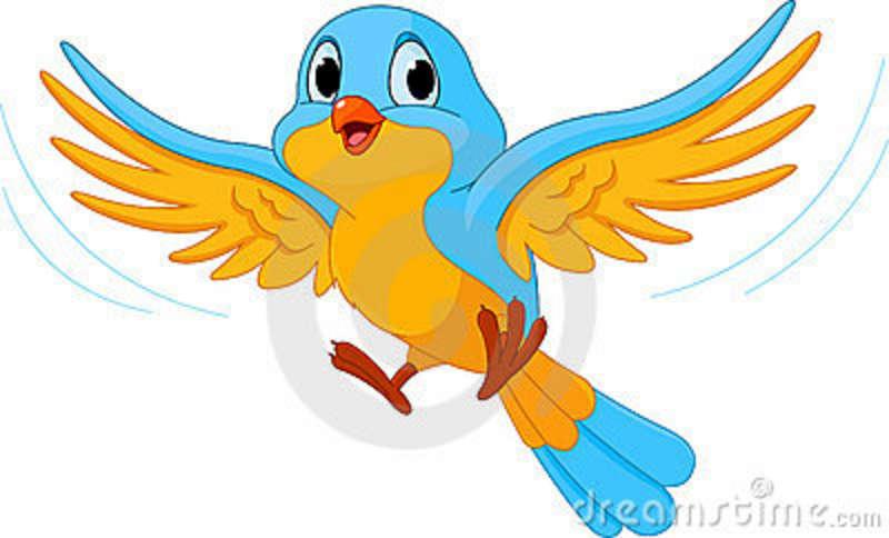 Beautiful Birds Flying Clip .-Beautiful Birds Flying Clip .-16