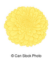 ... beautiful yellow flower isolated on white background