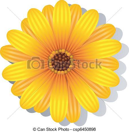 ... Beautiful yellow Gerber Daisy over white. EPS 8, AI, JPEG