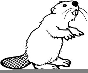 Oregon State Beaver Clipart Image