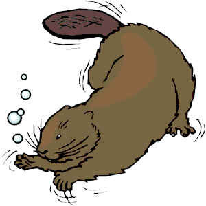 Beaver Swimming Clipart Cliparts Of Beaver Swimming Free Download