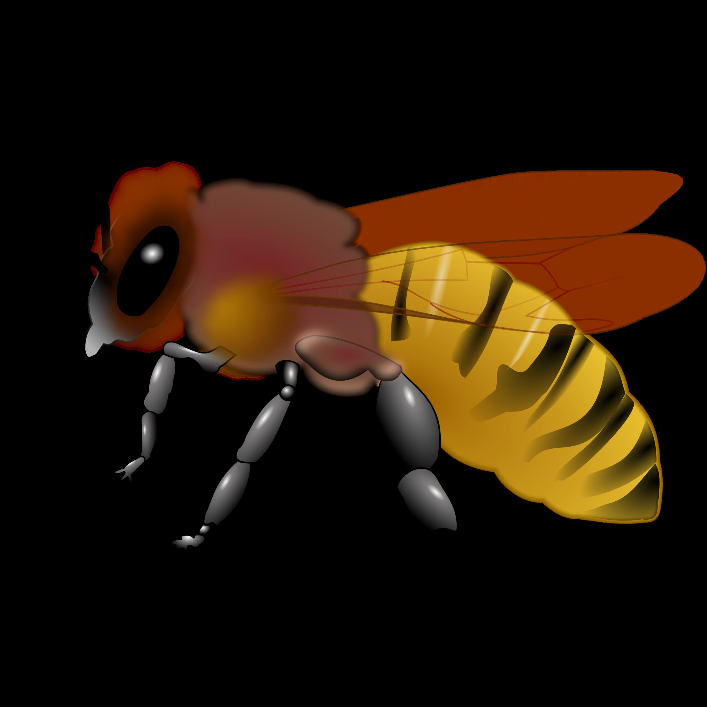 Bee Clipart : Honeybee-Bee Clipart : Honeybee-12