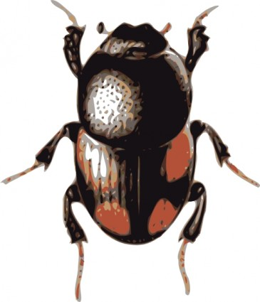 beetle clipart -beetle clipart -11
