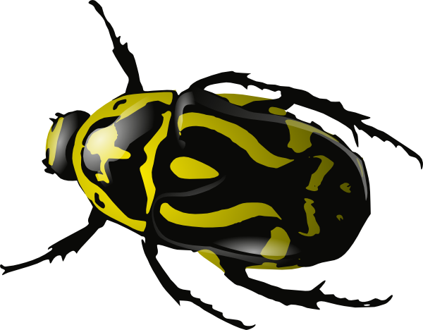 beetle clipart u0026middot; insect clipart