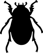 Insect-beetle-outline-animated-clipart-c-insect-beetle-outline-animated-clipart-crcasm2 insect beetle outline  animated clipart. Size: 44 Kb From: Animals-1