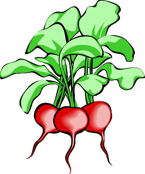 Beets Clip Art - Vector Clip Art Online,-Beets clip art - vector clip art online, royalty free public domain-12