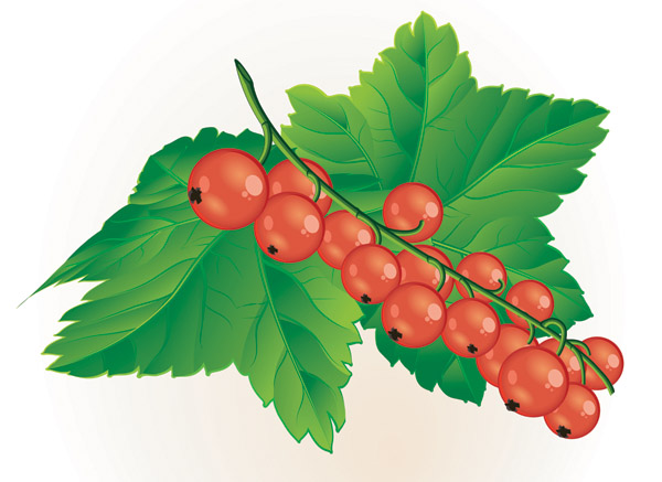 Berries Clipart-Clipartlook.com-600