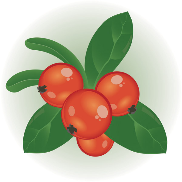 Berry 20clipart