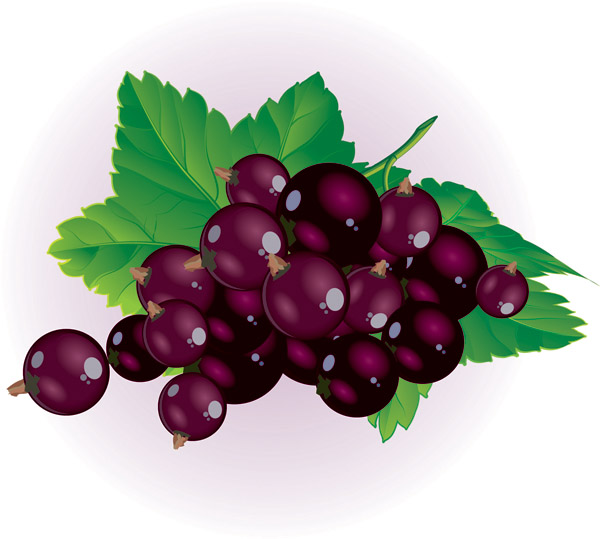 Fall berries clipart