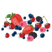 . ClipartLook.com Vector fresh berries