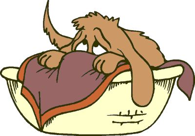 Best beds, Pet care and Dogs .