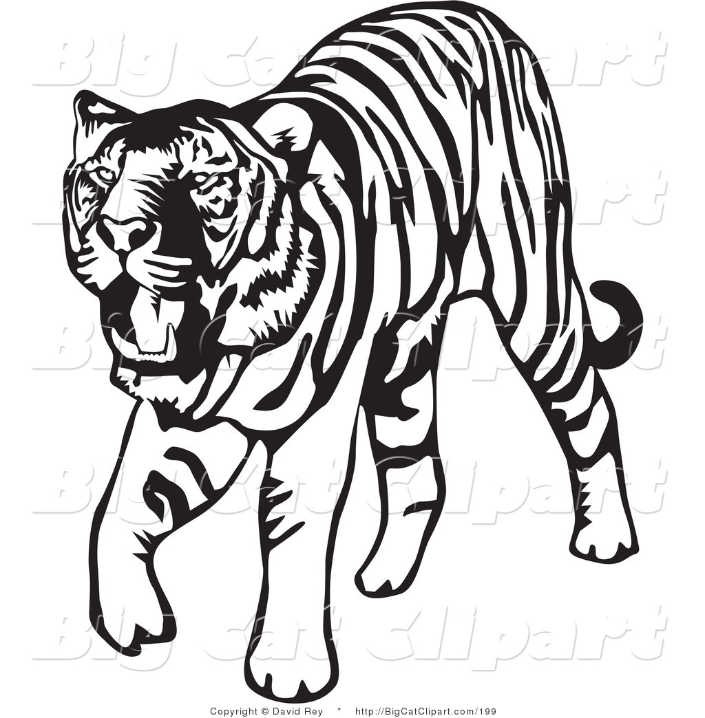 Big Cat Vector Clipart Of A Walking Blac-Big Cat Vector Clipart Of A Walking Black And White Tiger On White By-4