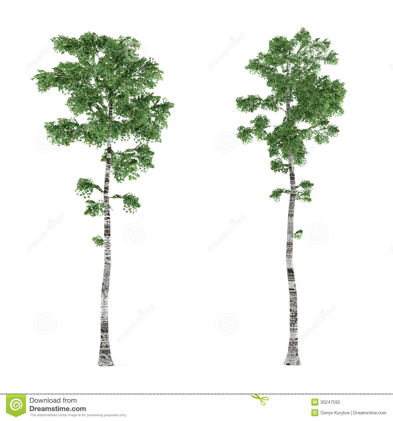 Birch Tree Background Clip