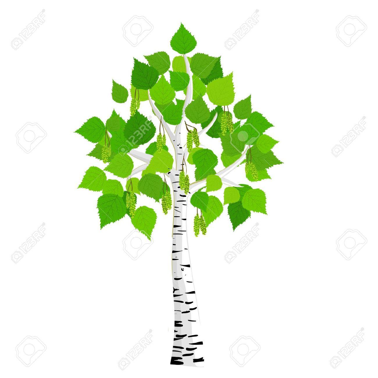 birch tree: birch tree