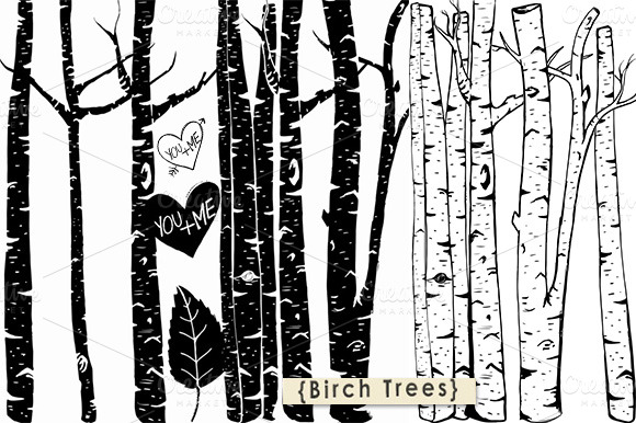 Birch Tree Clipart Photoshop Brush Illustrations On Creative