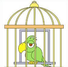 Bird Cage-Bird Cage-18