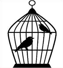 Bird Cage-Bird Cage-1