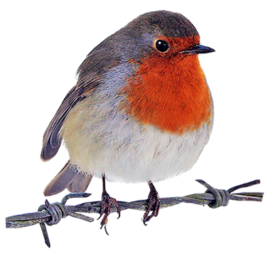 Bird Clip Art-Bird Clip Art-6