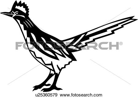 bird, roadrunner, southwest,